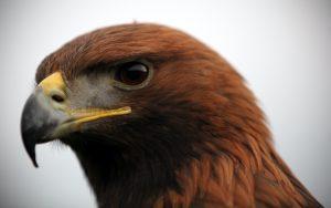 Bieszczadzki Park Narodowy to miejsce, gdzie spotkamy wiele dzikich zwierząt
